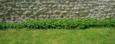 http://www.davancens.com/user_michel/Divers/a_conserver_%201_an/geranium%20Cantabrigiense%20Biokovo-2.jpg